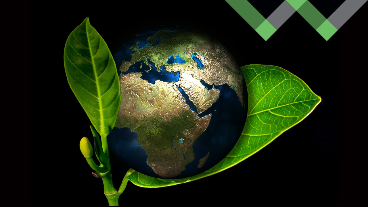 Noteworthy Sustainable and Game-Changing Companies throughout the World