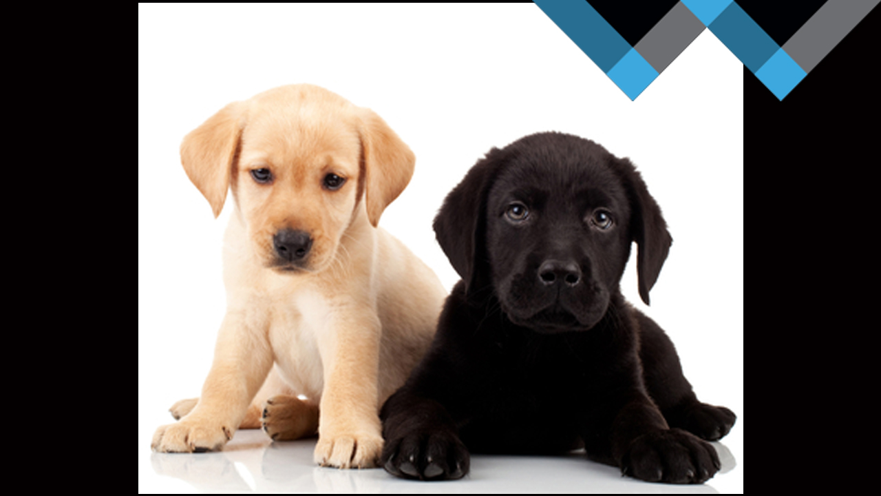 3 Leadership Lessons I Learned from My Labrador