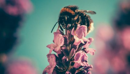 bees running politics politician agriculture