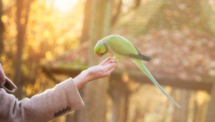 leadership employees pet animal leader
