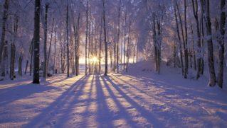 Winter wooded landscape