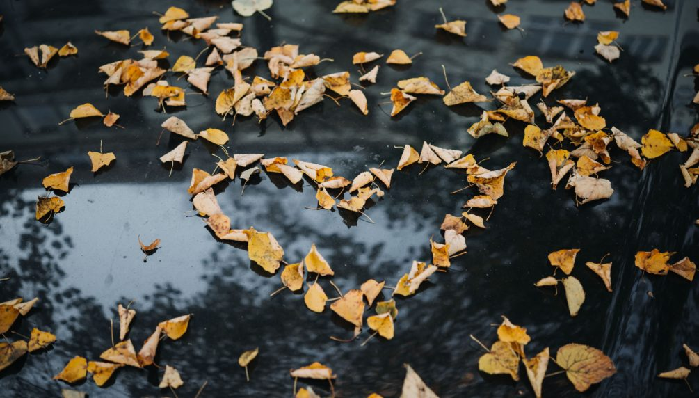 heart made of yellow leaves