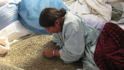 Woman sorting coffee beans_Anne