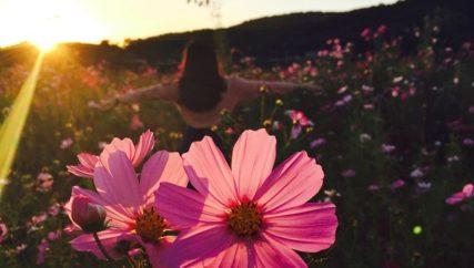woman in field of pink flowers