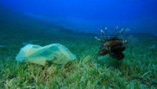 Environmental problem - a plastic bag litters a reef, beside a Lionfish