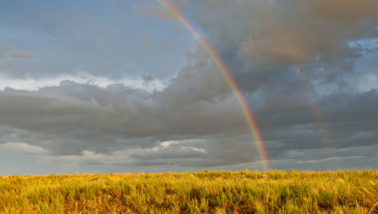 The rainbow over a lone tree was photographed in monsoon season in the meadows above Mormon Lake south of Flagstaff, Arizona.