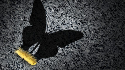 caterpillar on ground with the shadow of a butterfly