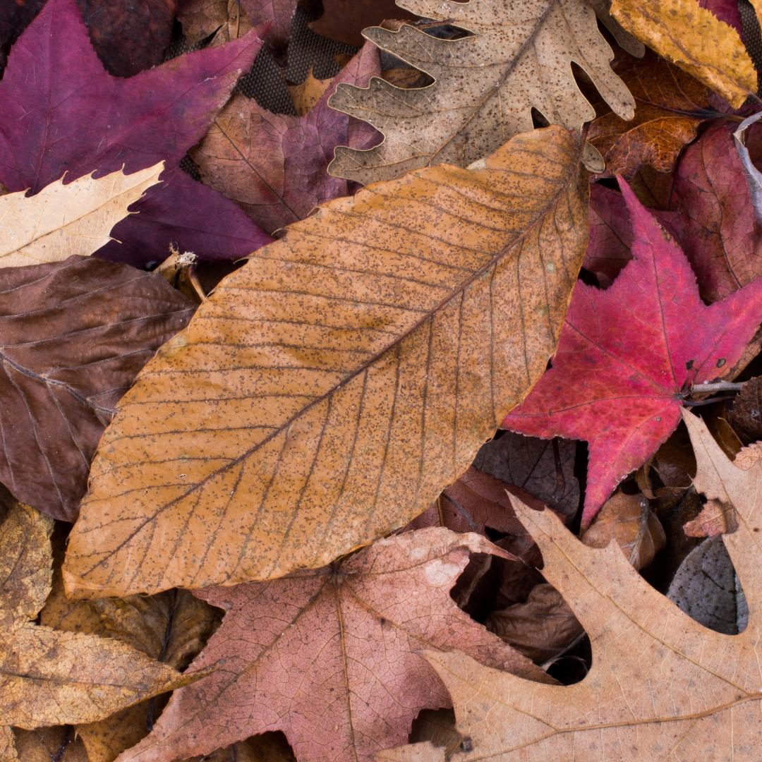 Dry Leaves Crunching Under My Feet